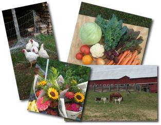 Picture - Chickens Veggies Flowers Horses